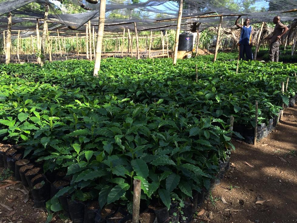 nursery-seedlings-to-be-planted